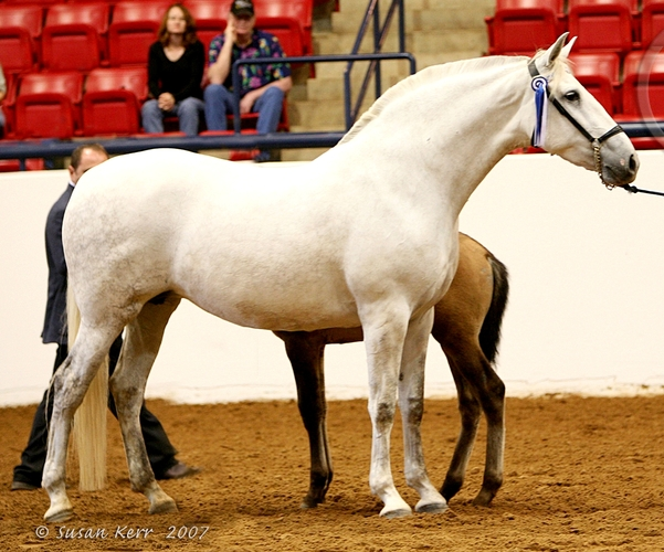 tupper farms andalusians